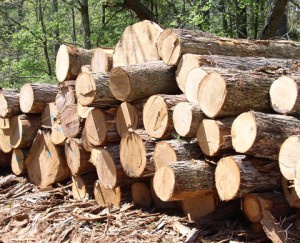 Timber firms get space on wood tracking system