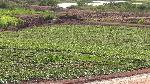 Casa de Ropa develops 660 acres of land for potato production