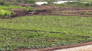 Casa de Ropa ramps up production with 660 acres of cultivated land