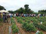 CSIR-SARI educates farmers on improved cowpea varieties