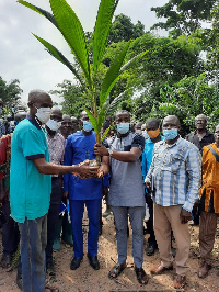Some 150 farmers benefitted from the coconut seedlings distribution