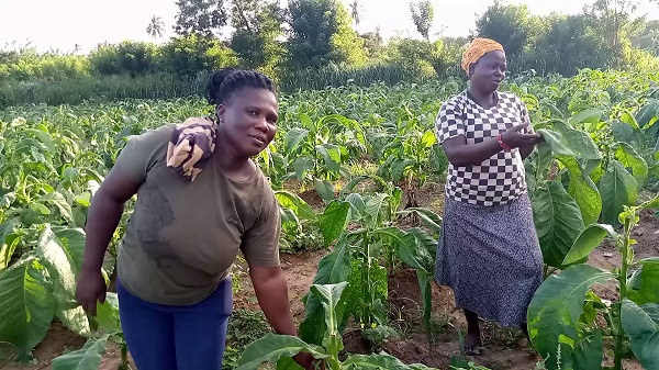 Tobacco farmers lament poor sales over closer of borders