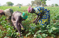 File photo: The farmers are unable to generate income to invest in their business due to coronavirus