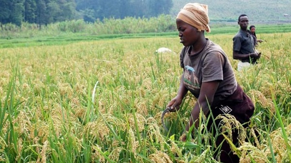 Government urged to create market access fund for smallholder farmers