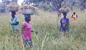 Some farmers tending their farms