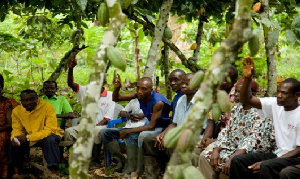 Cocoa Farmers J