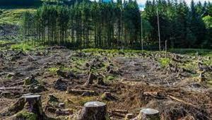 Afforestation In Gabon