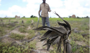 A Zimbabwean farmer walks through his maize field outside Harare