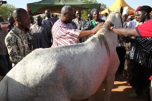 File photo: John Mahama strokes a white horse presented to him by Bawku Naba in 2014