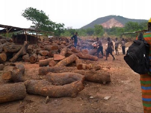Nigeria Chinese Hard Wood Logs