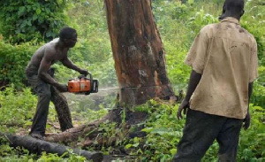 Felling of trees contribute to forest depletion