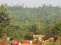 Forestation at Sefwi Wiawso