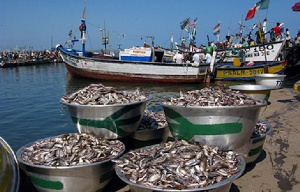 Ghana's fisheries sector alone employed about 10 percent of the entire population