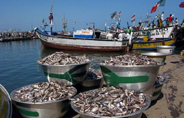 Government remains committed to resourcing aquaculture sector - Ato Cudjoe