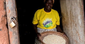 File photo of a woman carrying grains