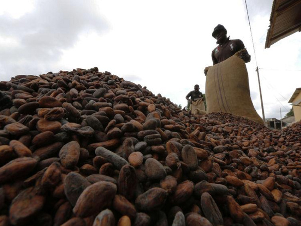 Cocoa Buying Companies sue GRA and COCOBOD over VAT
