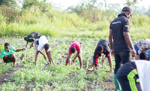 Make farming an attractive profession for Ghana's youth