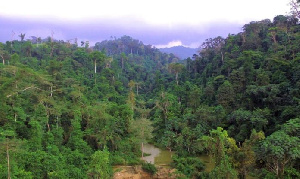 File photo of the Atewa Forest