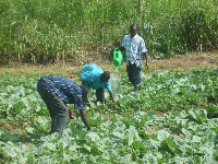 A farmer watering his crops.