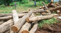 The chief stated that the level of commitment shown towards ending illegal logging is plausible