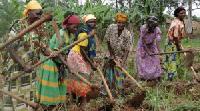 Woman Farmers weeding