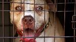 How dog bite Nigerian student for 'scrotum' for im hostel