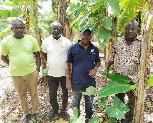 Economics Cocoa Farms 2