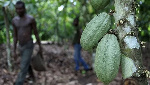 Ghana disputes new report on child labour rising in West Africa cocoa farms