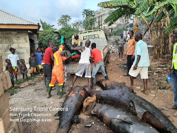 Smoked dolphins seized by Nzema East MCE