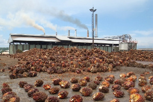 Ghana produces about 2,000,000 metric tons of oil palm fruits annually