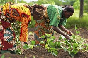 File photo [Women Farming]