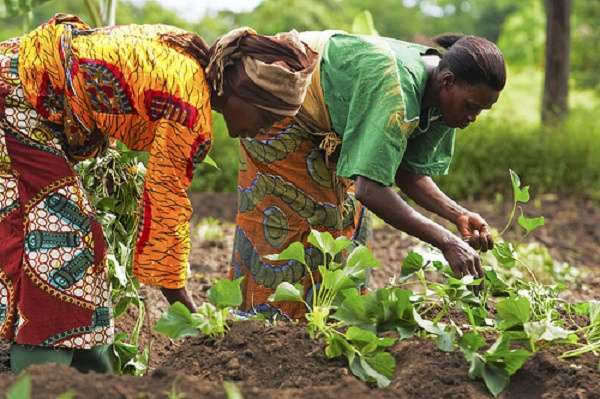 File photo [Women Farming]