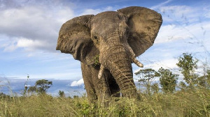 File photo: According official estimates, Namibia is home to some 28,000 elephants