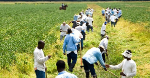 Commercialization of agriculture in the Prisons Service will help ensure food sustainability