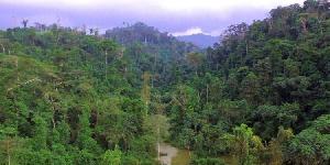 Atewa Forest E1566402399218 750x375