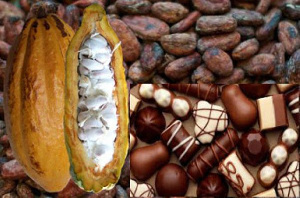 Cocoa is a major source of income for Ghana