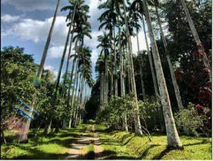 Bunso Arboretum, an exceptiona