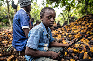 The report demanded systemic change to end cocoa poverty