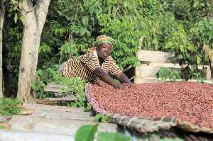 Ghana output nears 1 million tons, with months left to harvest
