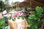 File Photo: Flowers on display