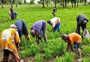 Peasant farmers
