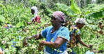 Let us invest in agribusiness and agriculture logistics -  Agribusiness analyst