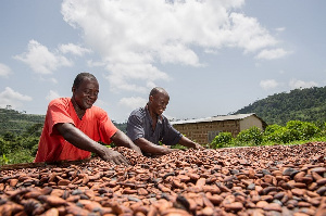 File Photo [A cocoa farmers]