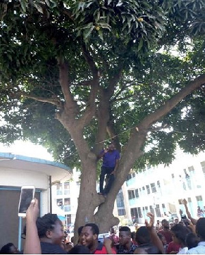 Kabu Nartey on the mango tree