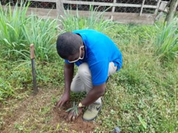 Let's make tree planting part of our national holiday celebrations – Annoh-Dompreh appeals