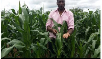 Workers of NADMO have expressed readiness to deal with the invasion of army worms on various farms
