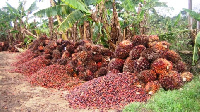 File photo: Oil palm fruits