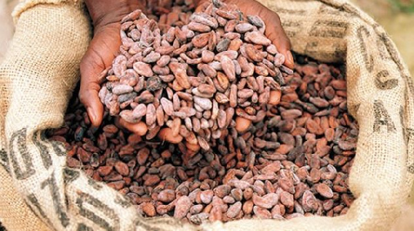 Use of cash costing cocoa sector US$21.5m annually