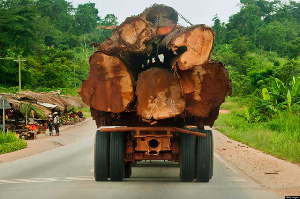 Timber Import