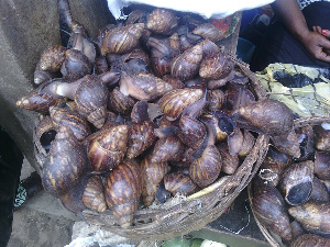 Snail rearing has become a lucrative business